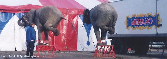 sirkus-trening
