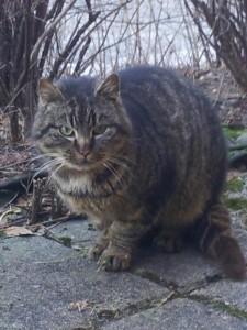 katt avlivet kvinesdal kreft
