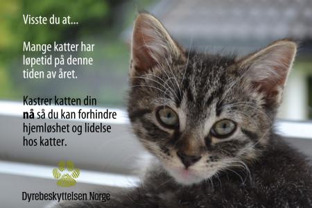 Katt, facebook, kastrering